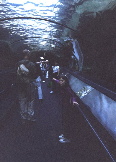 Day 03 - 16 - Darling Harbour Aquarium - Ali inside the tunnel